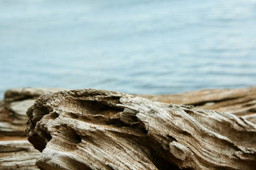 Twisted Driftwood with Lake Superior Background Wall mural