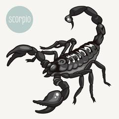 Scorpion 001