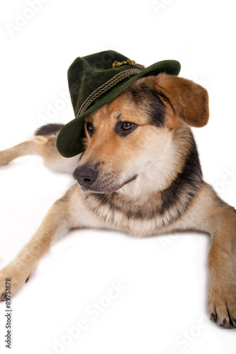 Liegender Hund Mit Hut Stock Photo And Royalty Free Images On