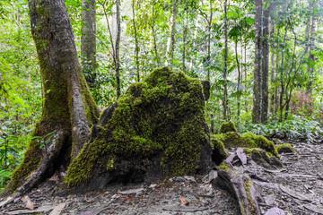 Moss on stone in deep  rainforest.