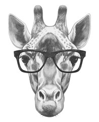 Portrait of Giraffe with glasses. Hand drawn illustration.