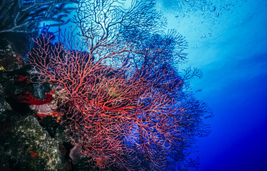 Garden Poster Under water Underwater coral reef