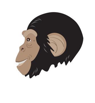 monkey head in profile
