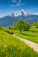 Wall Mural - Idyllic landscape in the Alps with meadows and flowers