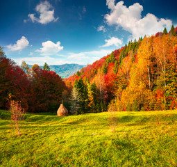 Foto op Plexiglas Oranje Colorful autumn landscape in the Carpathian mountains