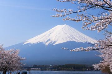 富士山と満開の桜 ソメイヨシノ 河口湖