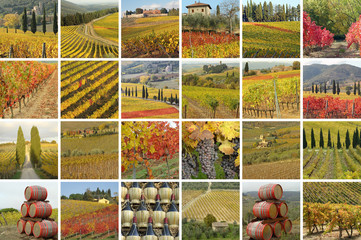fantastic tuscan vineyards in autumnal colors - many images comp