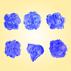 Set of blue roses symbol of love vector illustration