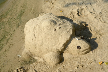 Turtle from sand on a beach