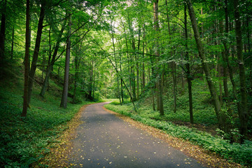 Abandoned asphalt road in a deep green forest