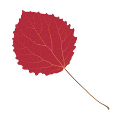Wall Mural -  red leaf aspen