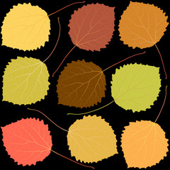 Wall Mural - autumn aspen leaves on a black background