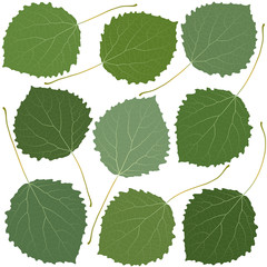 Wall Mural - green leaves aspen