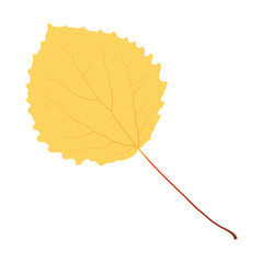 Wall Mural - yellow aspen leaf