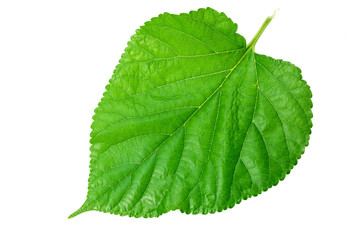 green leaf on a white 2