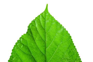 green leaf on a white 5