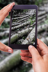 Photographing a forest