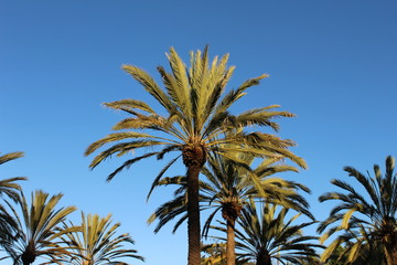Palm Trees - Southern California