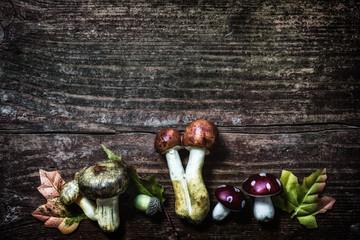 Pilze auf Holz