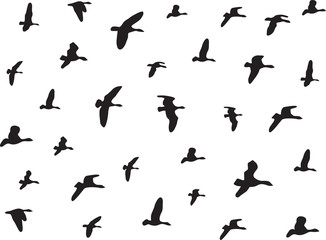 Birds flying isolated on white