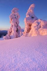 Fototapete - Sunset over frozen trees on a mountain, Levi, Finnish Lapland