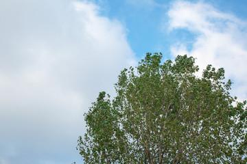 gökyüzü ve ağaç