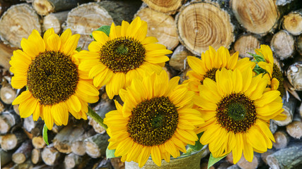Autumn Bouquet of Sunflowers with Woodpile. Closeup