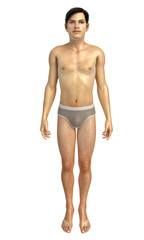 3d rendered illustration of male body anatomy