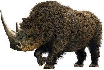 Woolly Rhinoceros/Collage representative of the Pleistocene (Ice Age) - woolly rhinoceros.
