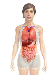 digestive system artwork