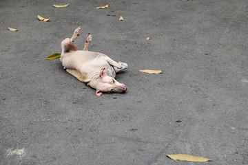 Stray dog lying on concrete floor