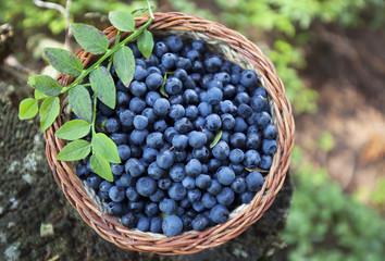 bio blueberry