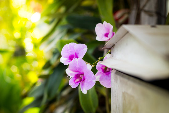 Beautiful orchid behind the letterbox.