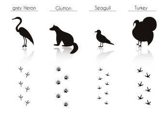 Set of Animal and Bird Trails with Name.