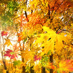 Wonderful day in golden autumn / falling leaves :)
