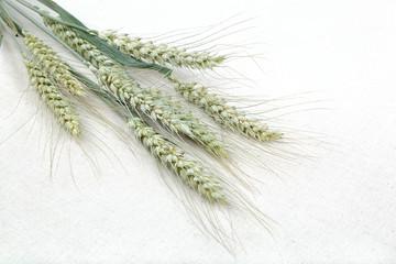 Sheaf of wheat ears on fabric.