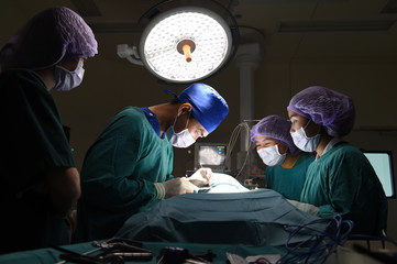 group of veterinarian surgery in operation room
