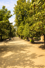 alley in the park - Wroclaw