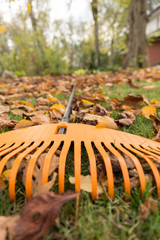 The rake in autumnal garden