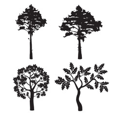 Black Forest Trees. Vector Illustration.