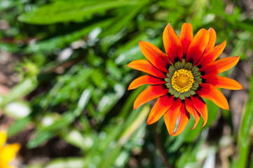 orange and red flower in green meadow