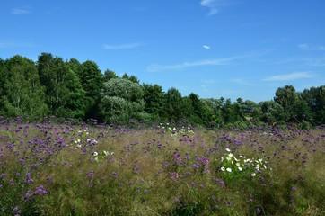 Naturlandschaft im Sommer mit Blumenwiese