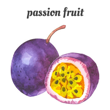 Vector illustration with watercolor fruit.