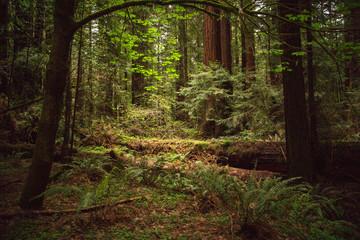 Sunlight on a Fallen Redwood
