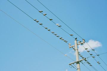 電線に留まる鳩
