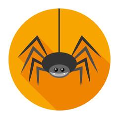 spider flat