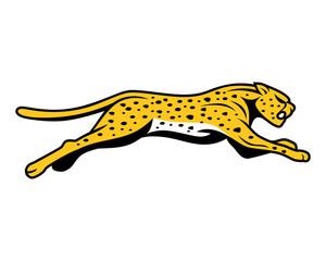 cheetahs run