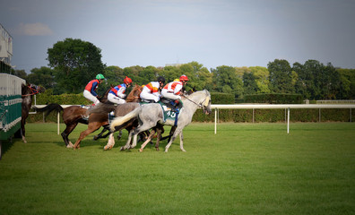 Arabian horse racing  warsaw