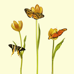 Retro styled image of three butterflies and tulips