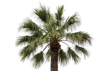 Isolated photo of green palm tree